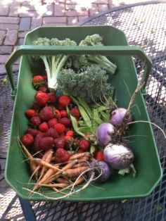 In Search Of: The Perfect Flat Bottom Garden Harvest Basket