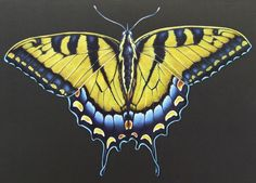 Swallowtail Butterfly. From Intricate Ink Animals In Detail Volume 2. A coloring book by Tim Jeffs. Colored by Jacqueline Noordijk.