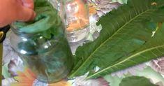 Liście chrzanu są jedyną rośliną, która potrafi wyciągać sól przez pory skóry - Smak Dnia Glass Vase, Decor, Decoration, Decorating, Deco