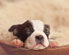 Community Post: This Newborn Puppy Photoshoot Will Make Your Day