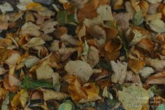 DAG 253: AUTUMN ON ITS WAY Project 4.12.365  http://phototroost.com/gallery/365/ #photography #fotografie #zeeland #autumn #leaves #beginning #pictureoftheday #imageoftheday #P412365