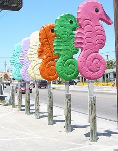 Port Aransas Seahorses - Photo by Snarkypants | My favorite place in the world right now is Port Aransas!