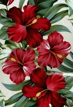 Tatto Ideas 2017 – Fabric, Red Hibiscus Floral on Cream, Tropical Hawaii, Bird of Paradise Flower, By the Yard Tatto Ideas & Trends 2017 - DISCOVER Tissu rouge Hibiscus Floral crème Hawaï par. Motif Tropical, Tropical Birds, Tropical Decor, Tropical Leaves, Tropical Flowers, Tropical Flower Tattoos, Colorful Birds, Hibiscus Flowers, Painting Art
