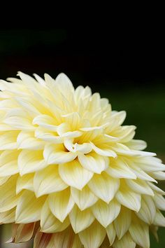 Dahlia (Melodian) What a pretty neutral color for wall paint!