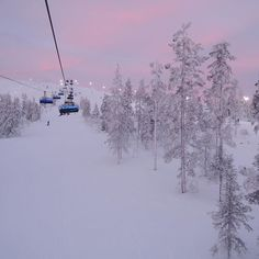 Pink skies & glowing snow - a most wonderful time taking a chairlift to top of mountain because floodlighting means sunset isnt the end of fun  #snow #winter #snowboard #ski #snowboarding #skiing #outdoors #hiking #mountain #cold #levifinland #travelling #ice #trees #traveler #naturelover #wildlife #powder #tourism #forest #water #instanature #tree #winterwonderland #snowing #travelingram #chairlift #skyporn #igtravel #cloudporn Snowboarding, Skiing, Kitesurfing, Pink Sky, Foodie Travel, Wonderful Time, Winter Wonderland, Travel Photos, Tourism