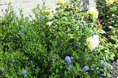 Pflanzstreifen in einem Vorgarten: Freundlich, bunt und einladend! Freundlich, Bunt, Plants, House Trees, Crushed Gravel, Weed, Shade Perennials, Planting, Nursing Care