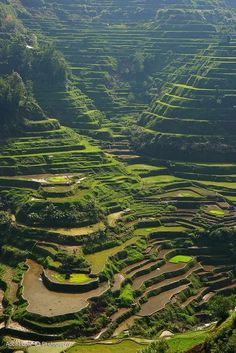 Banaue, Philippines. Click on the image to see the 10 most beautiful towns in the Philippines at TheCultureTrip.com[http://stunning-places.blogspot.com/2013/05/banaue-rice-terraces-in-philippines.html]