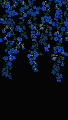 Black background with blue flowers Cellphone Wallpaper, Black Wallpaper, Flower Wallpaper, Screen Wallpaper, Cool Wallpaper, Mobile Wallpaper, Aesthetic Iphone Wallpaper, Aesthetic Wallpapers, Phone Backgrounds