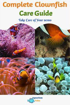 Biotope Aquarium, Saltwater Aquarium Fish, Tropical Aquarium, Planted Aquarium, Aquarium Setup, Aquarium Filter, Aquarium Lighting, Aquarium Ideas, Nitrogen Cycle