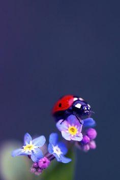 Tiny magic world... by Samantha-meglioli.deviantart.com on @deviantART