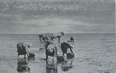 Shrimping, circa 1907