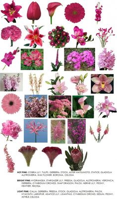 Pink flower guide.