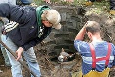 How The Donkey Came Out of the Well