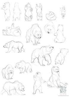 Bear concepts - Silly Beast Illustration ✤ || CHARACTER DESIGN REFERENCES…