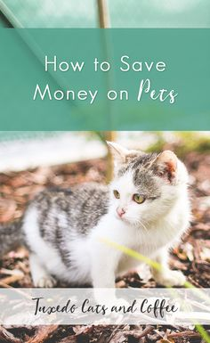 Ahh, pets. Our beloved four-legged family members. Here's a few tips for how to save money on pets and things that I did to save money while still giving my kitty the best life possible.