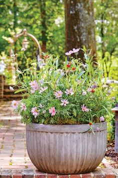 Take a cue from Mother Nature with this loosely planted display of cosmos. Container Flowers, Container Plants, Container Gardening, Succulent Containers, Vegetable Gardening, Outdoor Plants, Outdoor Gardens, Potted Plants, Cosmos Flowers