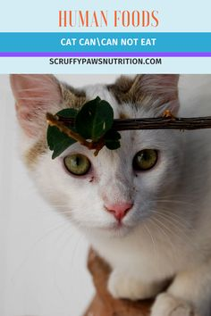 Learn about some human food that is safe for a cat's health. We help you to find some human food that is good for a cat's health. Check it out!! Cool Cat Toys, Cool Cats, Pretty Cats, Beautiful Cats, Cat Health, Health Tips, Baby Cats, Cats And Kittens, Foods Cats Can Eat