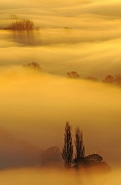 A wave of fog sweeps across the Somerset Levels at sunrise in Somerset, England.