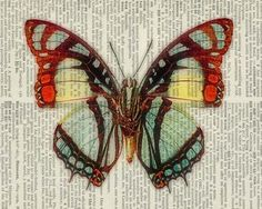 Butterfly - orange, aqua and yellow - printed on old page from vintage dictionary
