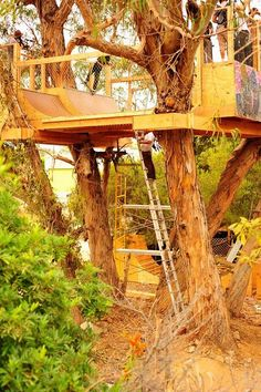 tree-top skate ramp...