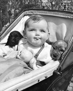 7 month old Christine Joy shares her pram with two 5 week old Gunsure Golden Cherry's cocker spaniel pups from Gunsure Kennels in Ashford, Middlesex. 22nd May 1953. (Photo by Fred Morley/Fox Photos)