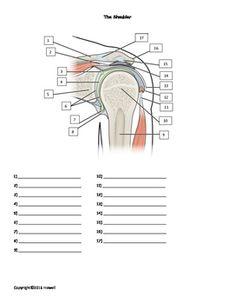 Major Nerves of the Upper Limb Unlabeled | Anatomy ...