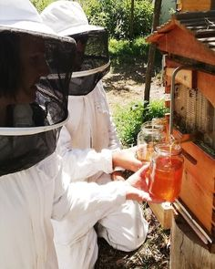 In February we had our very first harvest from our flow hives. 🍯 Flow hives cause minimal disturbance to the hard-working honeybees. Hives Causes, Save The Bees, Bee Keeping, Garden Inspiration, Botanical Gardens, Vegetable Garden, Harvest, Flow, Minimalism