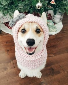 Corgi Dog Fashion Dog Fashion Pet Fashion Corgi Dog Fashion Lover Corgi Dog Fashion Lovers Pet Products Dog Product Dog Products Corgi Dog Product Dog Supply Dog Supplies Dog Cloths Dog Shirts Dog Hat is part of Corgi - Pet Fashion, Animal Fashion, I Love Dogs, Puppy Love, Costume Chien, Cute Puppies, Cute Dogs, Pet Costumes, Corgi Dog