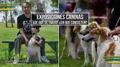 Exposiciones Caninas: ¿De qué se Trata? ¿En que Consisten? - TvAgro por ...