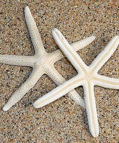 Love this White Finger Starfish Set by  on #zulily! #zulilyfinds