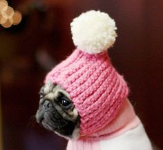 Daily DIY Pet Pattern - How To Crochet A Pom Pom Hat For A Dog ... REALLY?? Oh, but YES!!!