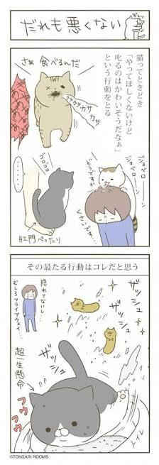 誰も悪くない Animals And Pets, Cute Animals, Digital News, Cat Art, Neko, Japan, Manga, Comics, Funny