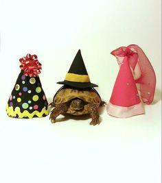 Pet Tortoise Costume Pet Costume Princess by DeerwoodCreekGifts