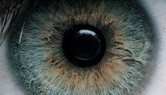 iris of the eye.
