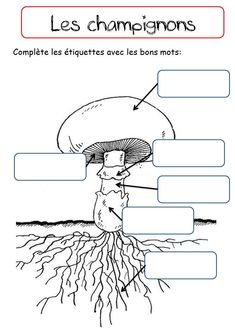 LES CHAMPIGNONS - La classe de Corinne Primary Science, Science Art, Science For Kids, Activities For Kids, Environmental Studies, Science Worksheets, Forest School, Nature Study, Botany