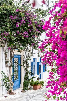 Street in Pyrgos, Tinos, Cyclades, Greece Greece Honeymoon, Greece Vacation, Greece Travel, Greece Trip, Tinos Greece, Santorini Greece, Bougainvillea, Mykonos, Wonderful Places