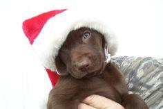 ¿Dónde está mi regalo? blog.theyellowpet.es