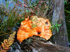 Six Mile Lake Provincial Park Ontario Canada - Autumn Mushroom Ontario Camping, Mushroom, Canada, Autumn, Park, Plants, Fall, Parks, Flora