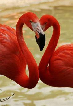 Red Flamingos photo credit: donated by Anna Pham (National Wildlife Federation) Pretty Birds, Beautiful Birds, Animals Beautiful, Beautiful Things, Exotic Birds, Colorful Birds, Exotic Animals, Foto Flamingo, Flamingo Flower