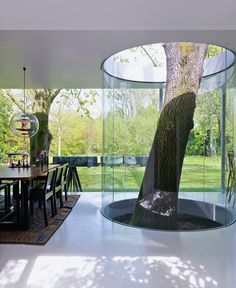 A glass wall built around a living tree