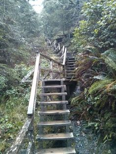 Florencia Bay Staircase   Ucluelet B.c.