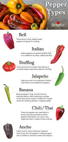 Browse a variety of Pepper seeds & plants. Hot & sweet seeds for over 115 different types of Pepper plants available in many shapes, colors & flavors. Hot, sweet, bell peppers, jalapeno and habanero peppers at Burpee. Perfect Fry, Perfect Grill, Mexican Food Recipes, Snack Recipes, Drink Recipes, Types Of Peppers, Pepper Plants, Stuffed Sweet Peppers, Baking Tips