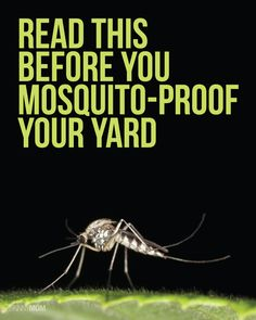 Read this before mosquito-proofing your yard!