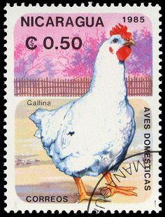 Nicaragua, 1985, gallus domesticus