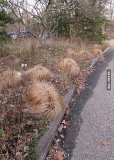 I found the place where Donald Trump grows his hair!
