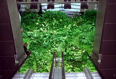 Shopping Mall, Les Passages, Boulogne-Billancourt | Vertical Garden Patrick Blanc