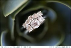 As Sweet As Images are Wedding Photographers Based in Auckland. Specialising in Capturing Romantic, Emotion-Filled, & Vibrant Wedding Images. Wedding Bride, Wedding Rings, Wedding Images, Wedding Details, Heart Ring, Wedding Photography, Romantic, Engagement Rings, Color