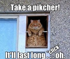 Dump A Day Attack Of The Funny Animals - 60 Pics