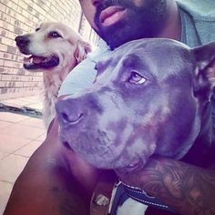 43 Likes, 5 Comments - Mary Jane Life Is An Adventure, Chilling, Cannabis, Mary Janes, Labrador Retriever, Dogs, Animals, Instagram, Labrador Retrievers