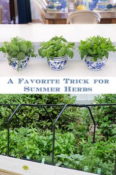 This simple little trick will make it super easy to always have fresh summer herbs at your fingertips all season long! #freshherbs #herbgarden #kitchentips Lunch Recipes, Beef Recipes, Chicken Recipes, Dinner Recipes, Healthy Recipes, Indoor Gardening, Container Gardening, Cooking With Fresh Herbs, Farmers Market Recipes